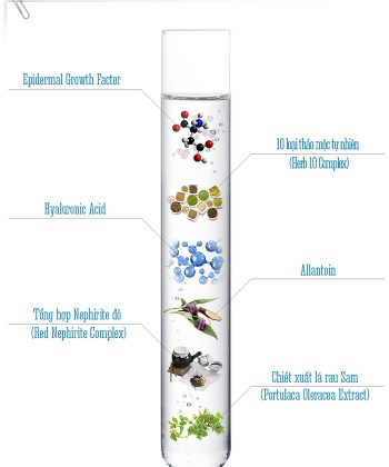 Thành phần chính của Hydro Fresh Formula